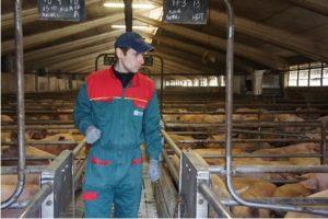 ▲養豚所のオーナー ロベルトさん。クライ社の厳しい基準をクリアする高品質な豚を育てている。