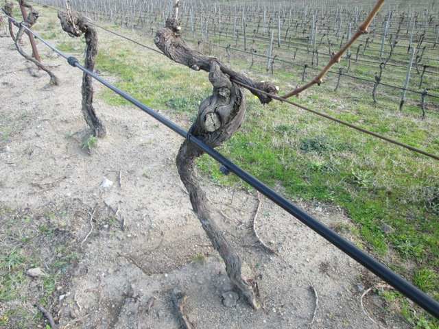 ワイン作りに適した土壌