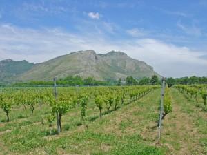 ▲テラーロ社の畑。背後にはモンテ・カミーノ山。北のロッカモンフィーナと南のモンテ・カミーノに挟まれるような山がちな地形に位置している。