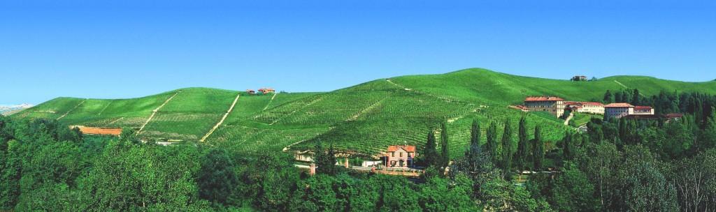 ▲ワイナリーの周囲を囲むブドウ畑