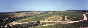 ▲美しいブドウ畑。全て有機栽培