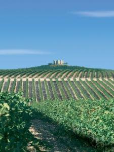 カステル・デル・モンテ城の周りに広がる畑